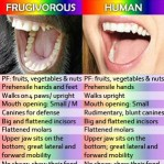 Science_Verifies_That_Humans_Ancestors_Were_Frugivores