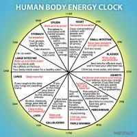human_energy_clock_liver_spleen