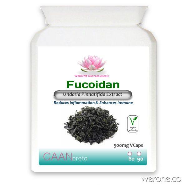 Fucoidan_Seaweed_extract_Immune_System