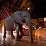 Elephants_Hotel_Lobby_Zambia_Dinner_thumb