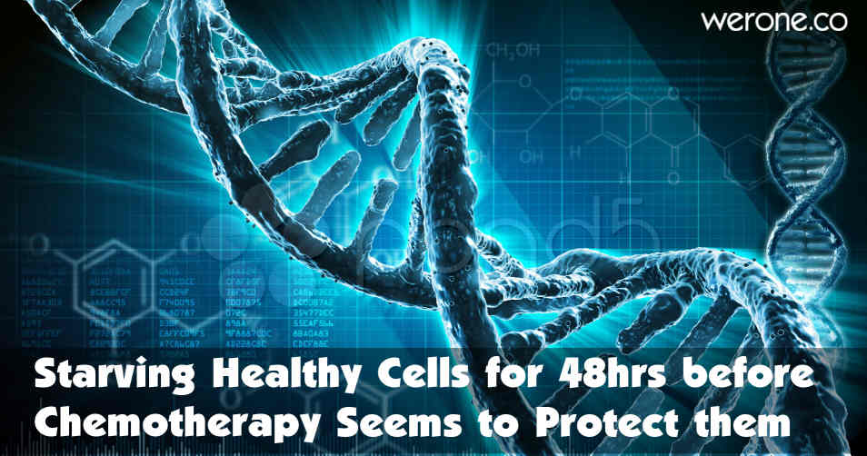 Starving-healthy-cells-48_hours-before-chemotherapy-seems-to-protect-them