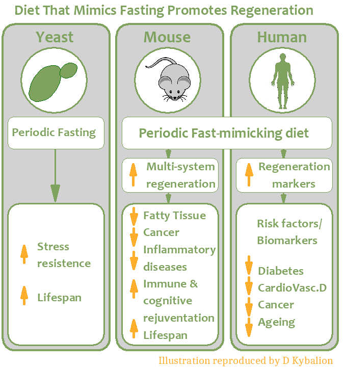 Effects of Diet on Cardiovascular System