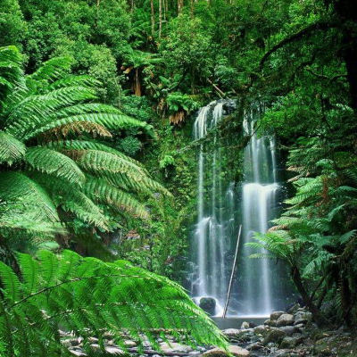 See Rain Forest Healing Techniques Put To The Test